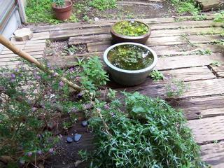 ド根性植物11.jpg
