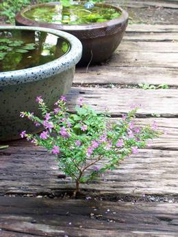 ド根性植物21.jpg
