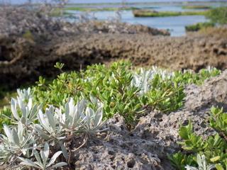 岩上植物1.jpg