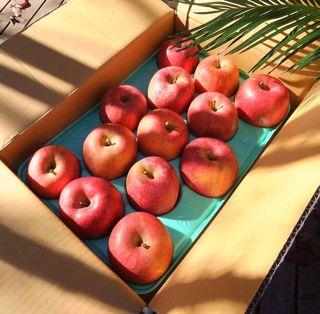 抗酸化リンゴ01.jpg