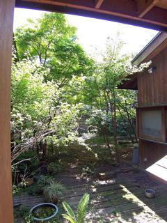 新緑の庭1.jpg