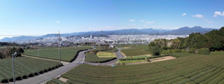 日本平茶畑1.jpg