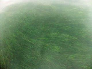 浜名湖藻1.jpg