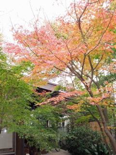 紅葉20101.jpg