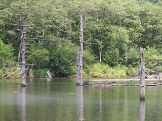 大正池1.jpg