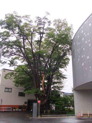 松本市民芸術館裏保存林1.jpg