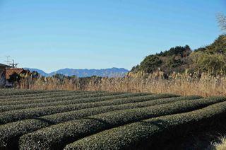 池田山風景1.jpg