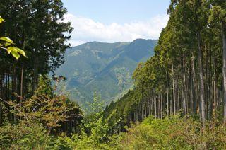 高山の森.jpg