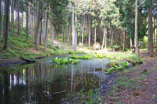 高山の池.jpg