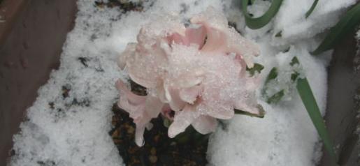 flower.7.jpg
