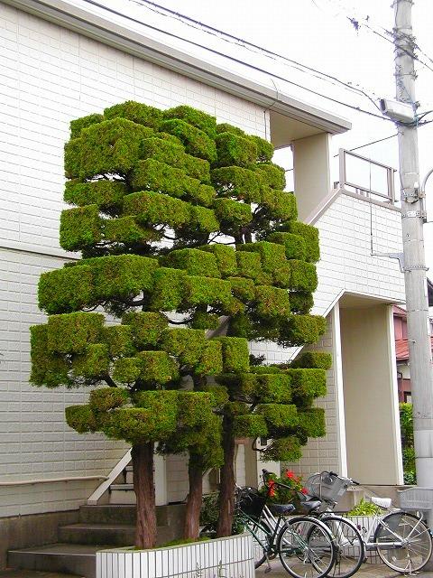 庭木剪定もデジタルの時代。 - ...